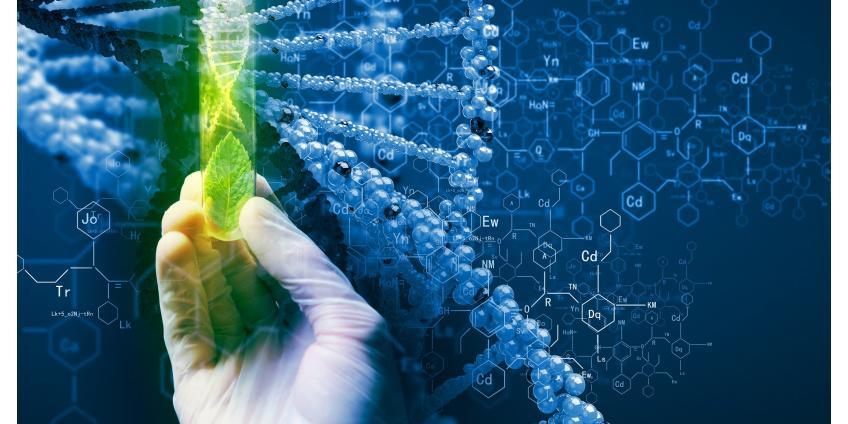 Современная фунготерапия и новейшие исследования